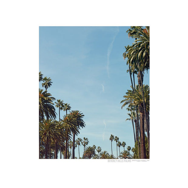 Beverly Hills Palms Poster