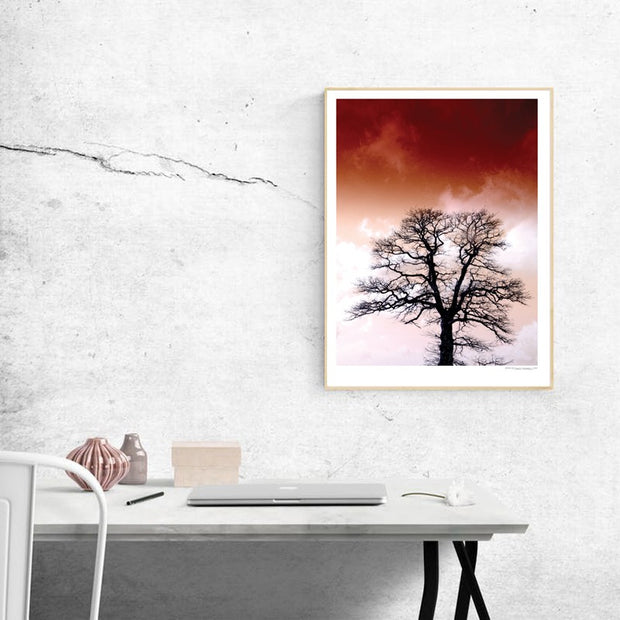 Blomberg Tree Poster