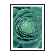 Botanical Leaf Poster