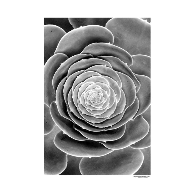 Black Botanical Poster