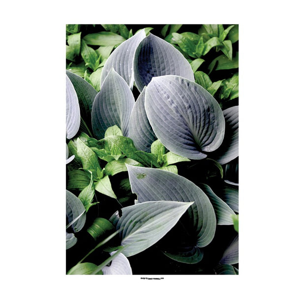 Green Sepal Poster