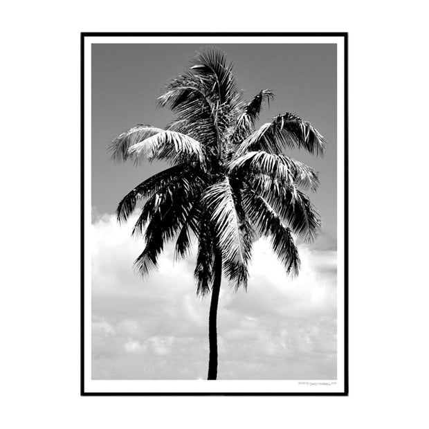 Lonely Palm Poster