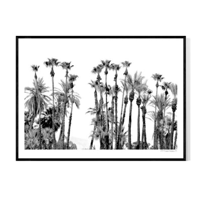 Palm Desert Palms Poster