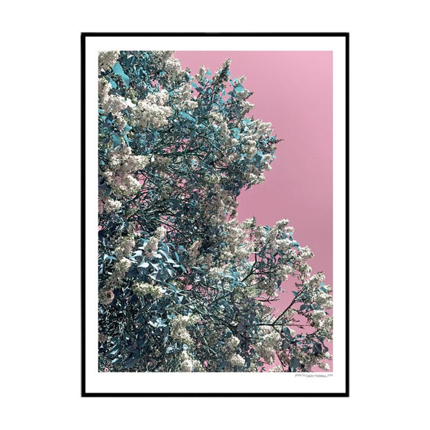 Pink Lilac Poster