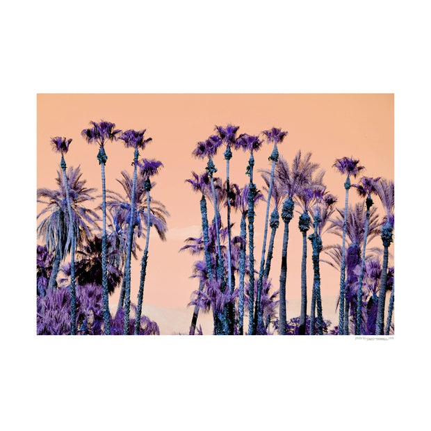 Purple Palms Poster
