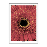 Red Blossom Poster