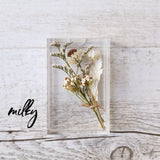 Milky Baby Dried Flower Box