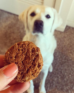 CBD dog biscuit treat holistic