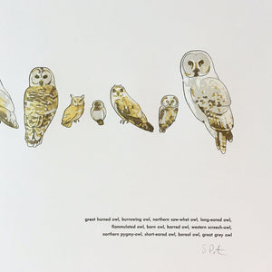 "Green Bird Press Letterpress Print - ""A Few Owls"""