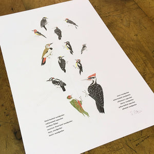 "Green Bird Press Letterpress Print - ""A Few Woodpeckers"""