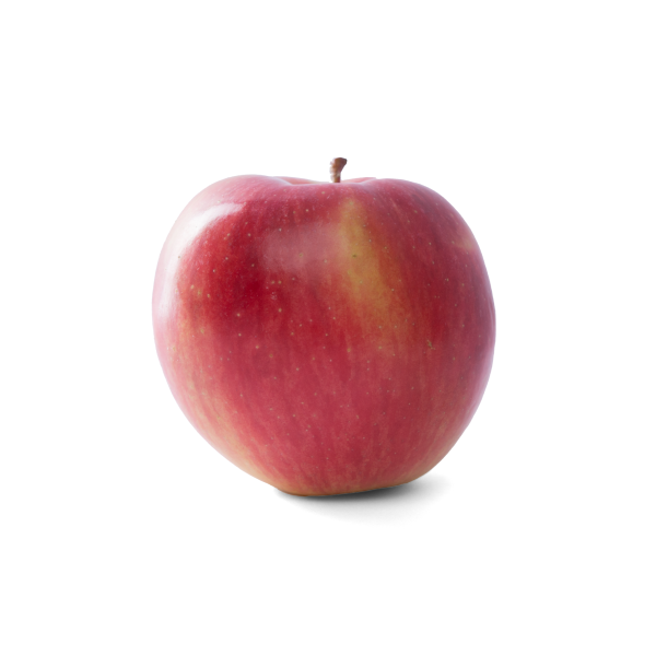 Lettuce cos mini