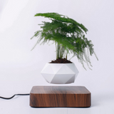 MAGNETIC AIR BONSAI