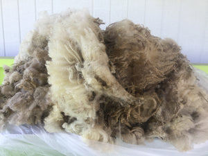 #7 Finnsheep Fleece - Cream