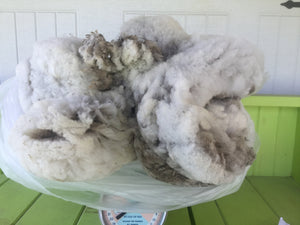 #9 Finnsheep Fleece - White