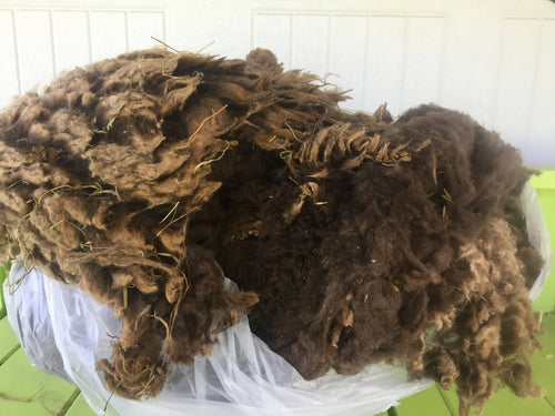 #15 Finnsheep Fleece - Brown with White Tips