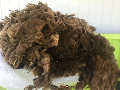 #12 Finnsheep Fleece - Brown with light tips