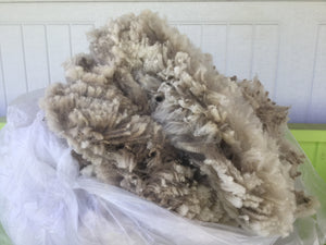 #13 Finnsheep Fleece - White