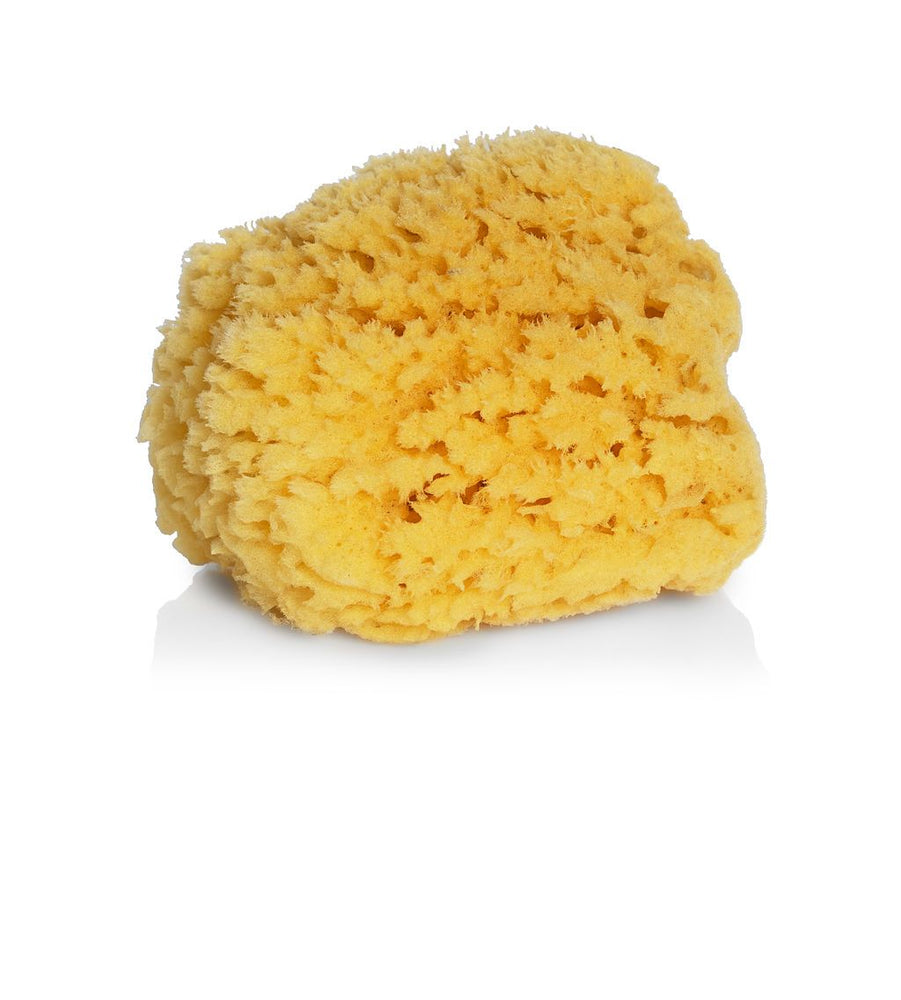 Authentic Sea Sponge