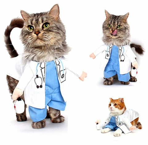 The Professional Cat Costume