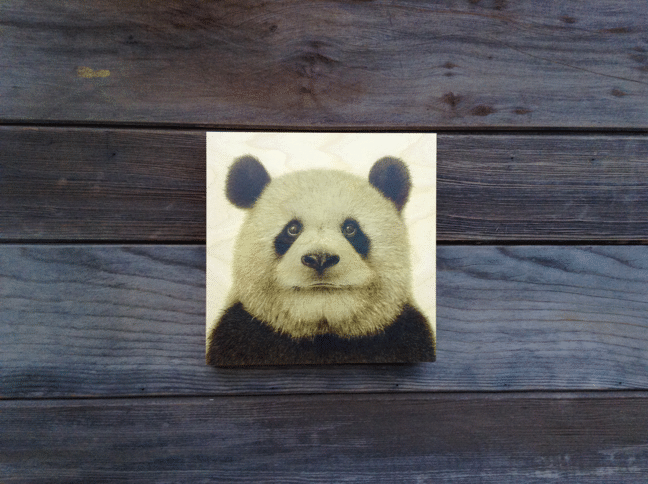 Panda Animal Portrait Coffee Painting Wood Print