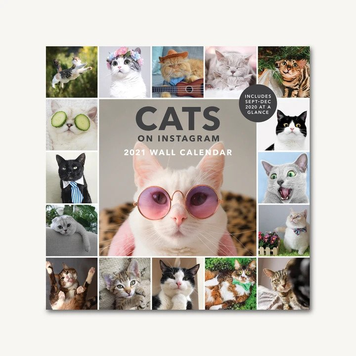 Cats on Instagram 2021 Wall Calendar