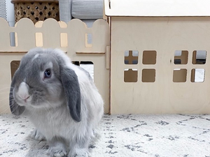 TokiHut Wooden Rabbit House and Garage™️