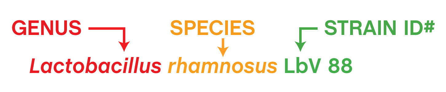 A picture that breaks down the genus, species, and strain identification number in an overall strain name. The example shown uses Lactobacillus rhamnosus LbV 88. In this case, Lactobacillus is the genus, rhamnosus is the species, and LbV 88 is the strain identification