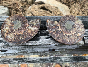 Beautiful Ammonite Fossil Pair with Opalization