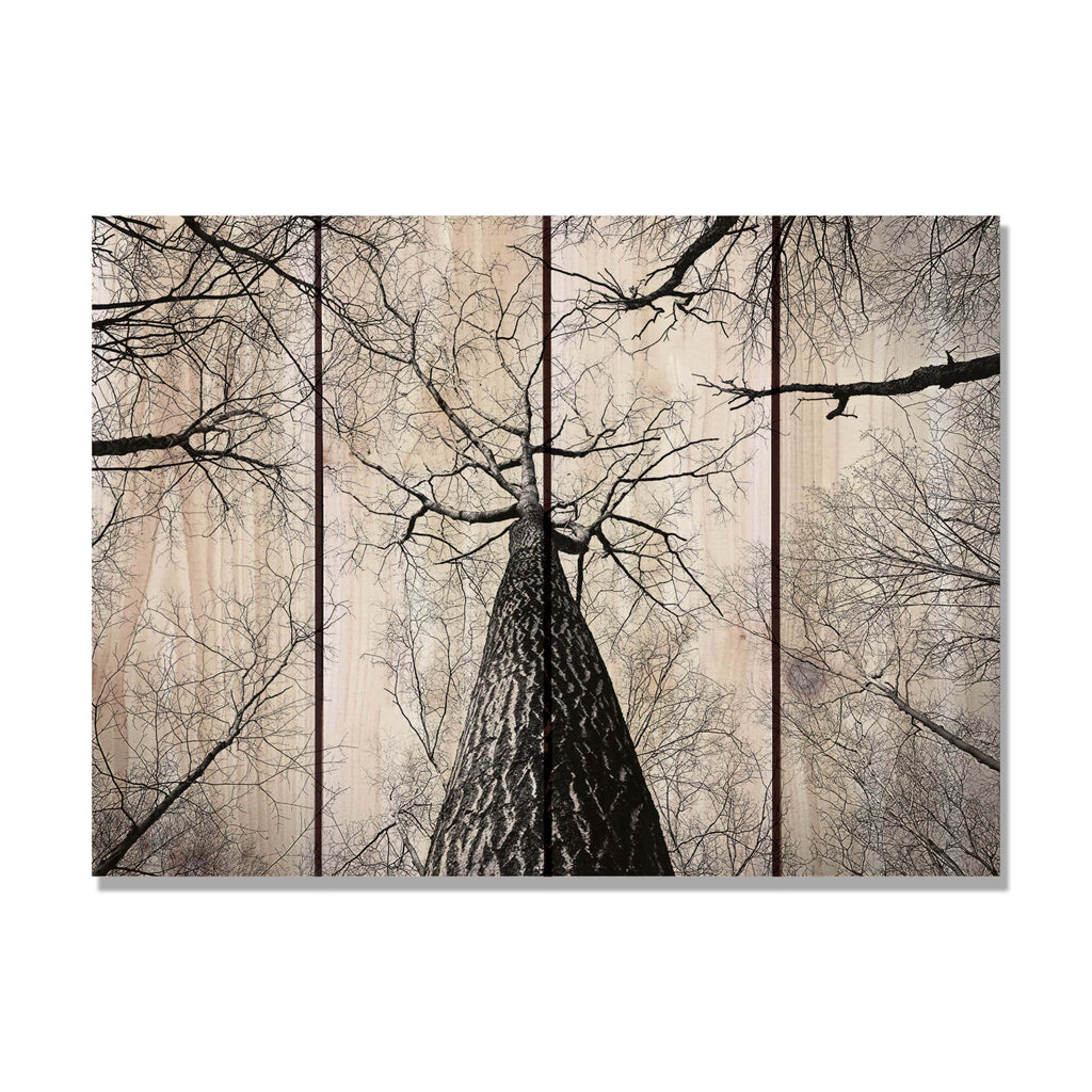 Among Giants - Black and White Trees Wood Wall Art DaydreamHQ FenceEscape 22x16