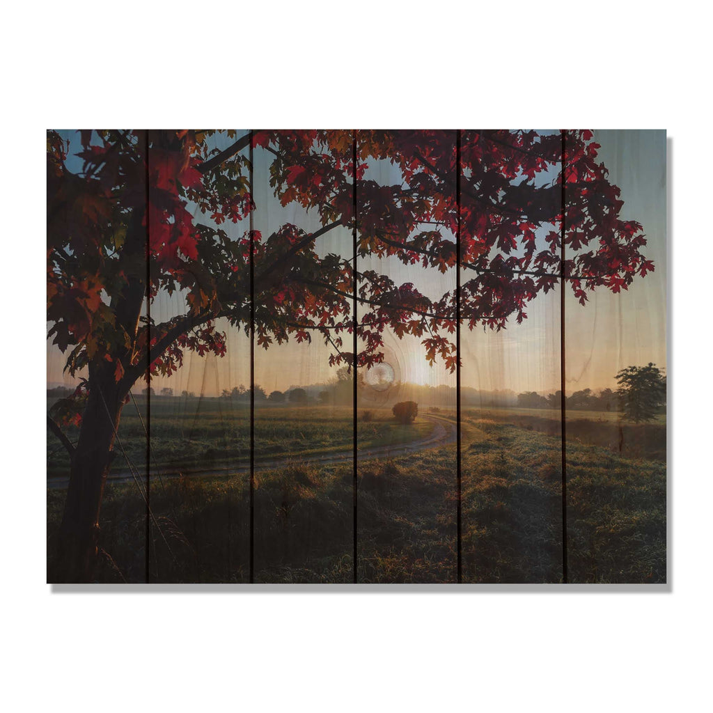 Autumn Sunset - Contrasted Tree Wood Wall Art DaydreamHQ FenceEscape 33x24