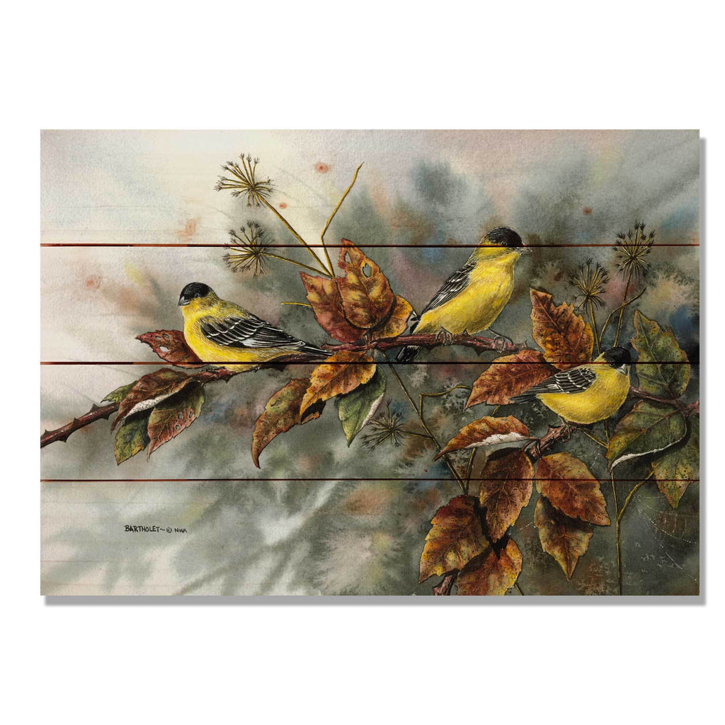 "Bartholet's Goldfinches - Classic Pine Wood Artist Series DaydreamHQ Pine Wall Art 20""x14"""