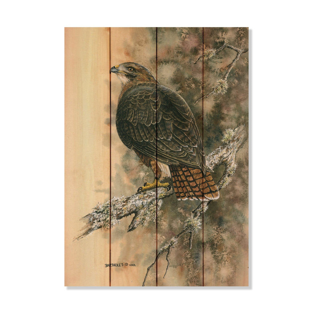 "Bartholet's Red Tailed Hawk - Classic Pine Wood Artist Series DaydreamHQ Pine Wall Art 14""x20"""