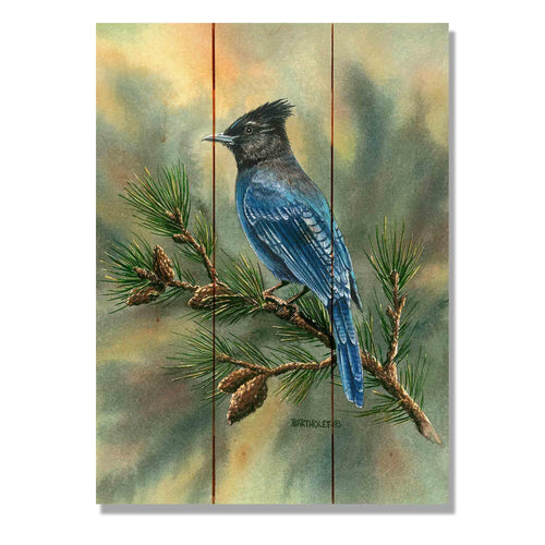 "Bartholet's Steller's Jay - Classic Pine Wood Artist Series DaydreamHQ Pine Wall Art 11""x15"""