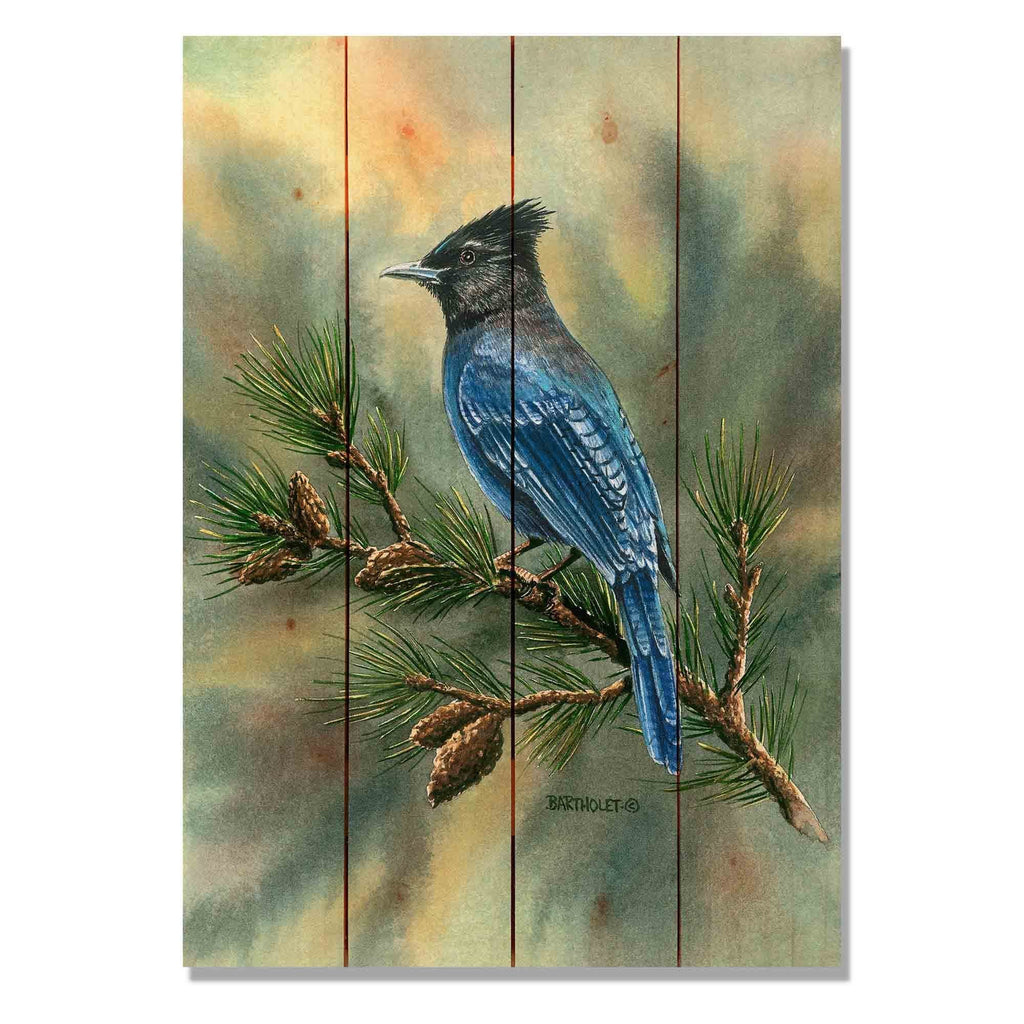 "Bartholet's Steller's Jay - Classic Pine Wood Artist Series DaydreamHQ Pine Wall Art 14""x20"""