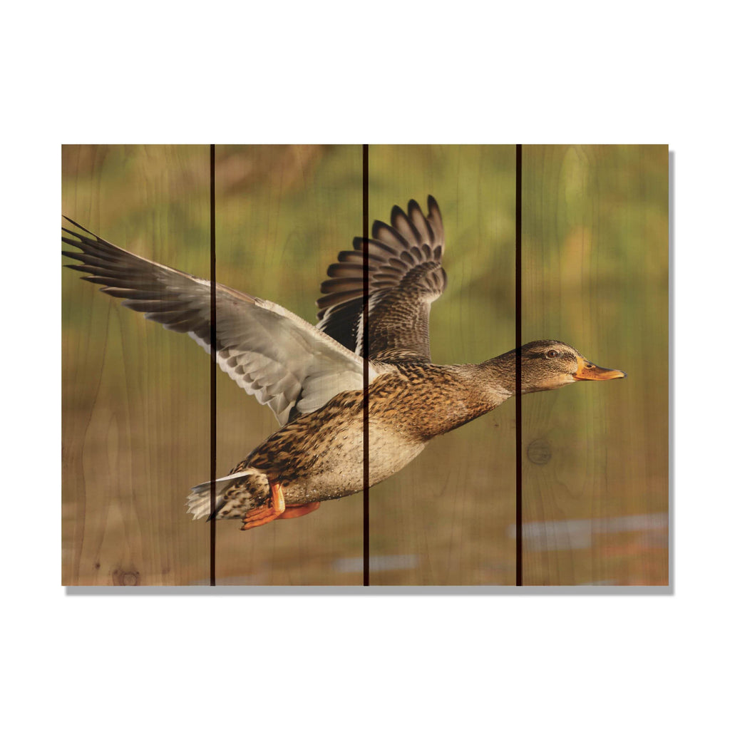 Majestic Mallard - Duck Wood Wall Art DaydreamHQ FenceEscape 22x16
