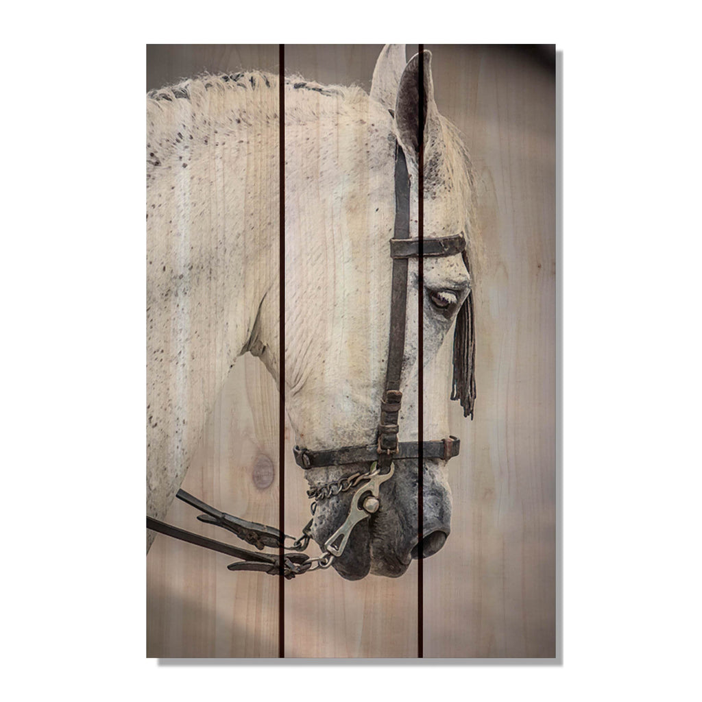 Noble Steed - Horse Wood Wall Art DaydreamHQ FenceEscape 16x24