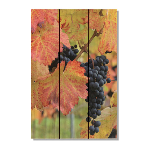 "Summer Harvest - Grape Wood Wall Art DaydreamHQ FenceEscape 16""x24"""