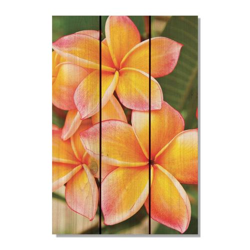 "Tropic Flower - Vibrant Wood Wall Art DaydreamHQ FenceEscape 16""x24"""