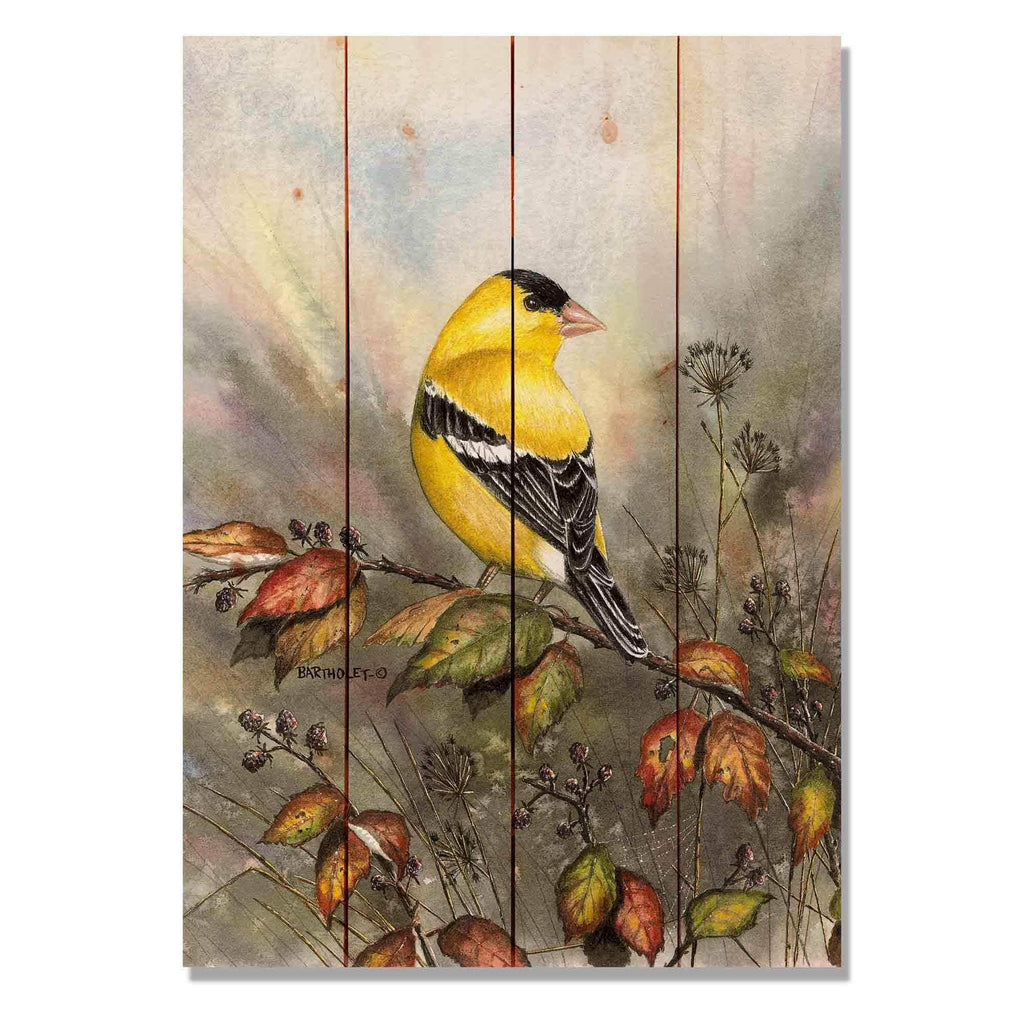 Goldfinch by Dave Bartholet - Bird Wood Wall Art DaydreamHQ 14x20