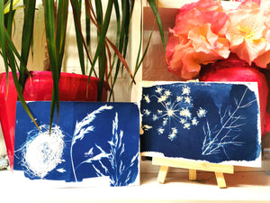 Cyanotypes Sat 23rd May 1-4pm