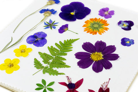 pressing flowers for pressed flower crafts