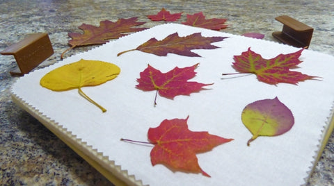 fall leaves, preserve, press, leaf press, leaf pressing, preservation, microfleur, flower press