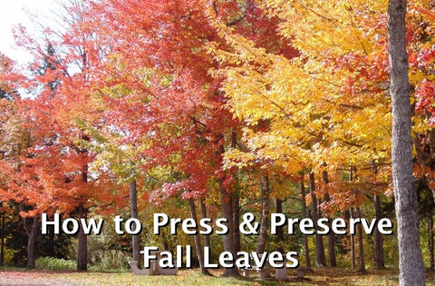 fall leaves, preserve, press, leaf press, leaf pressing, preservation