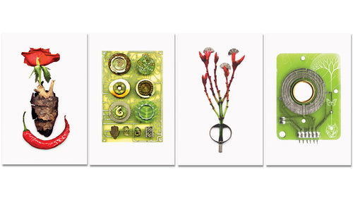 Limited Edition Postcards - Set Of 4 - Deya Dova