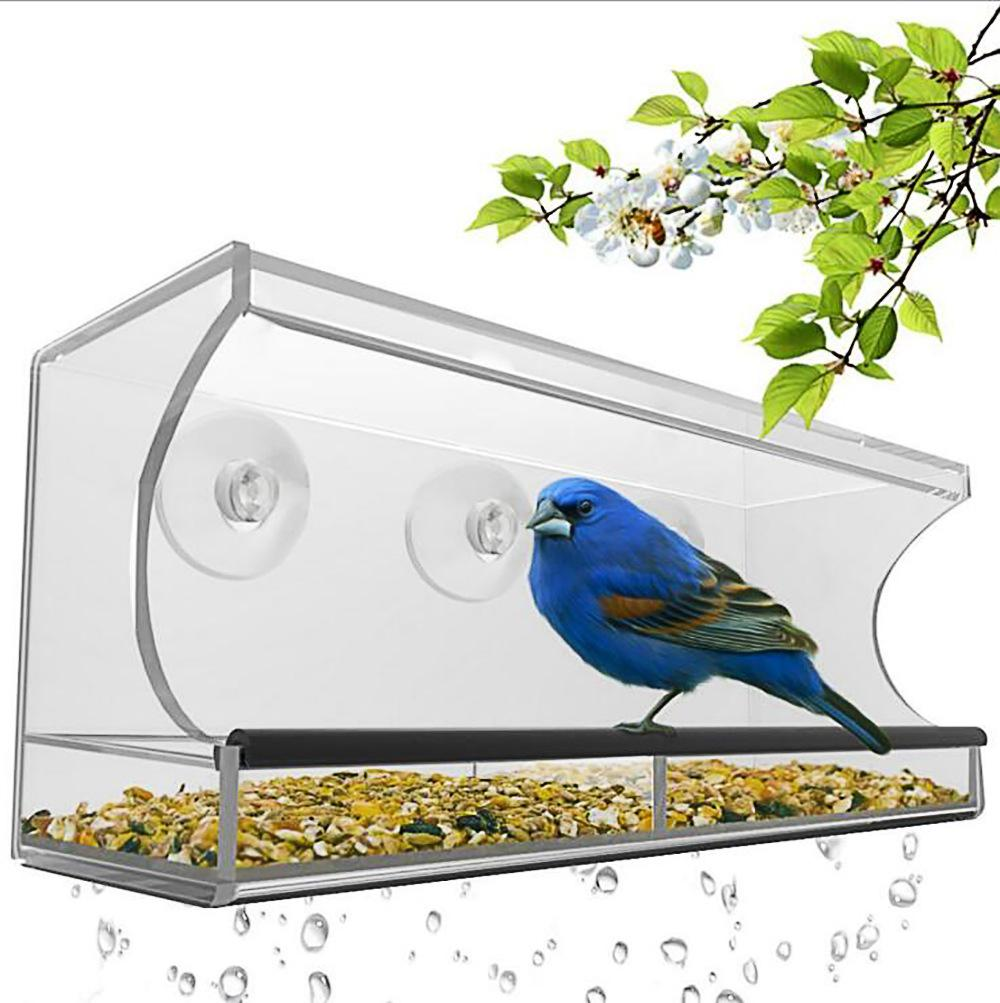 Clear Glass Viewing Bird Feeder