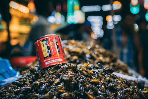 insectes comestibles marché