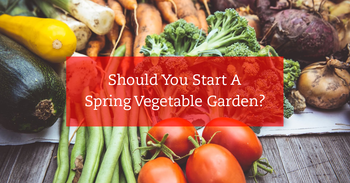 Should You Start A Spring Vegetable Garden?