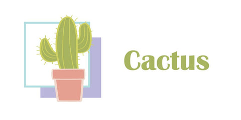 cactus plant, easy to care for plants