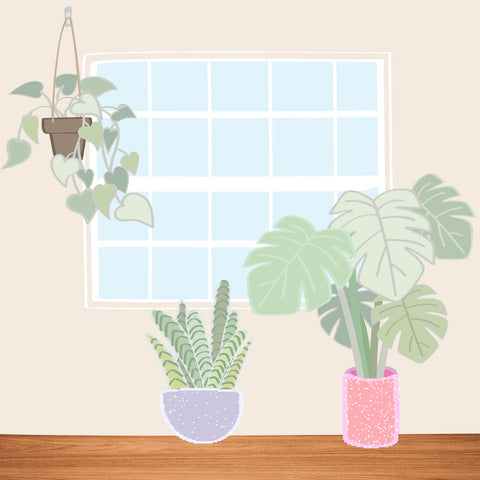 indoor plants, green your space, plants for improving air quality