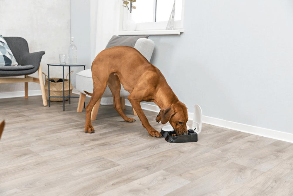 Trixie Pet TX2 Automatic Food Dispenser, Dual Compartments, Dual Timer, Gray/Black